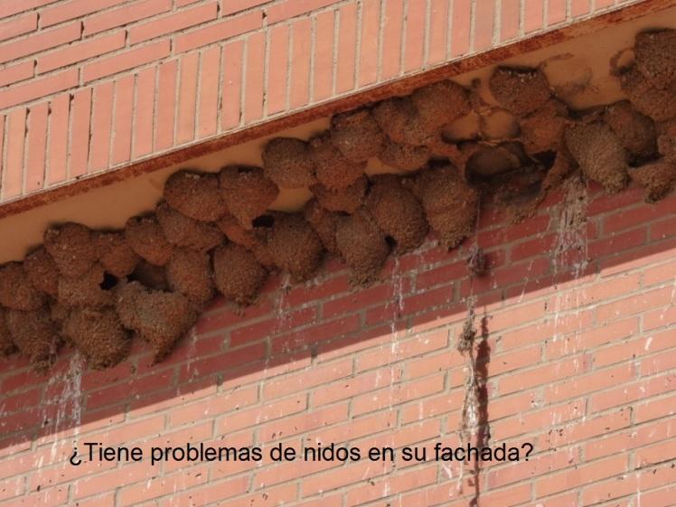 ¿Problemas con nidos en su fachada