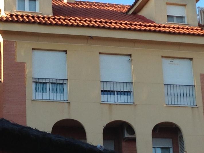 Nidos de avión en ventanas