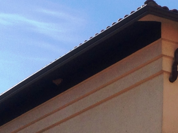 Pintura anti-nidos