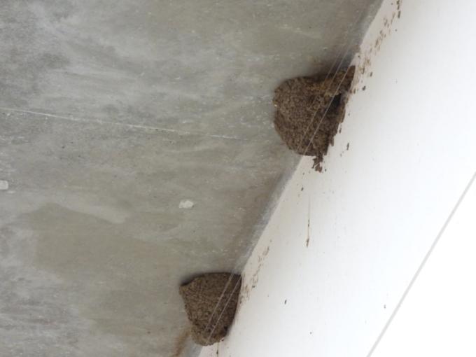 Alambres anti-nidos