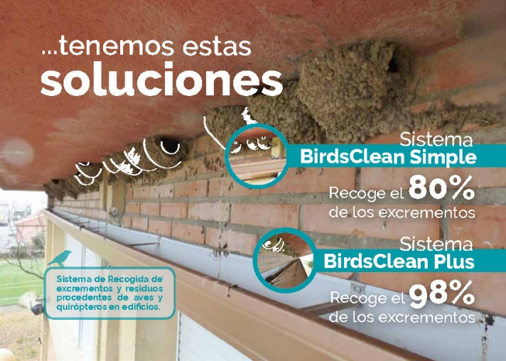 flyer-birdsclean-opt2_pagina_2