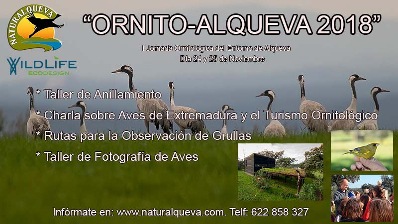 """NATURALQUEVA » I Jornadas Ornitológicas """"ORNITO – ALQUEVA"""""""